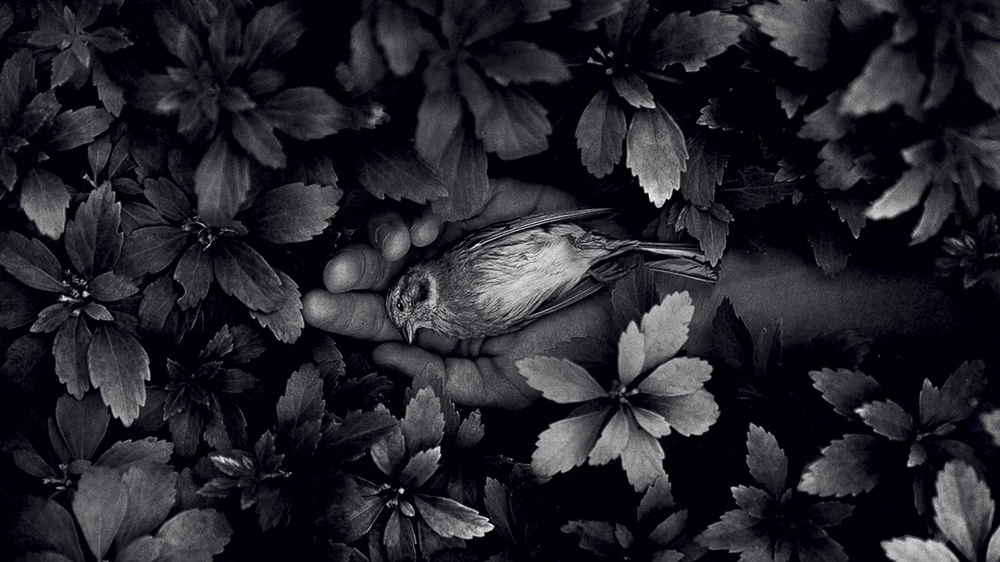 bird_1.thumb.JPG.a5d00b0fd0bc2c13d33b71f110df087a.JPG